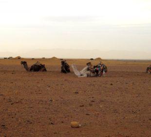 Kamele Stargazing Hotel SaharaSky