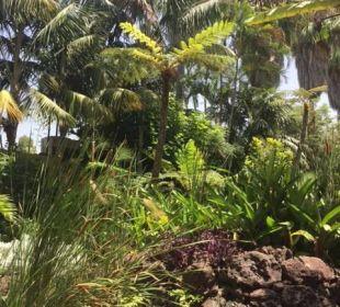 Subtropische Pflanzenwelt Hotel Tigaiga