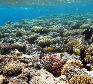 Unterwasserwelt  Cyrene Grand Hotel