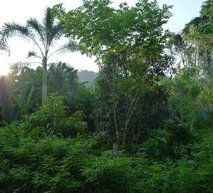 Ausblick ins Grüne Guest House Green Garden House
