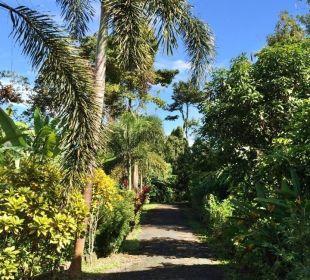 Einfahrt zum Green Garden House. Guest House Green Garden House