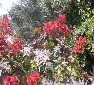 Kompliment an die Gärtner ... traumhafter Garten Hotel Grecotel Eva Palace