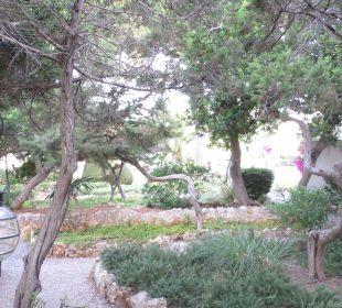 Garten JS Hotel Cape Colom