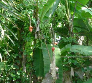 Bananenbäume vor der Haustüre. Guest House Green Garden House