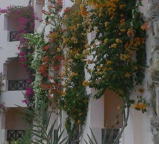 Wunderschöner garten Hotel Safira Palms
