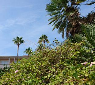 Palmen Playa Garden Selection Hotel & Spa