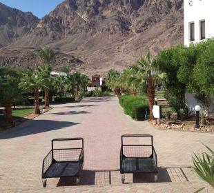 Blick in die Hotelanlage und das Sinai Gebirge