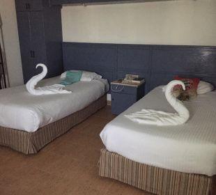 Schwäne SUNRISE Select Royal Makadi Resort
