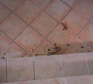 Treppe zu den Appartements  Hotel Barcelo Jandia Playa