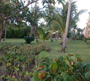 Gepflegte Gartenanlage Now Larimar Punta Cana