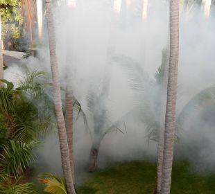 Moskito-Bekämpfung Hotel Natura Park Resort & Spa