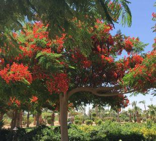 Gartenanlage Steigenberger Al Dau Beach Hotel