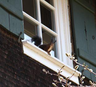 Eichhörnchen an der Fassade Waldknechtshof