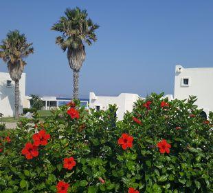 Gartenanlage Aeolos Beach Hotel