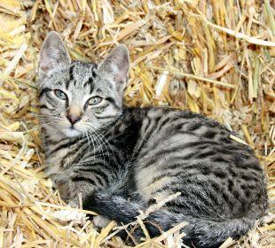 Babykatze Ferienhaus Wattkuckuck
