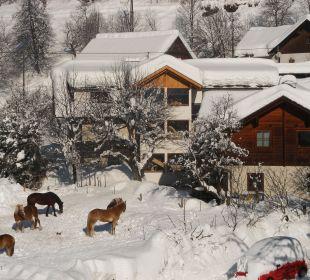 Neuschnee lieben die Knallerhofpferde Bio Bauernhof Knaller