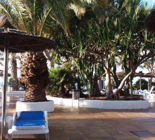 Pool VIK Hotel San Antonio