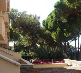 Widok na dachy i pinetę Park Hotel Marinetta