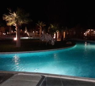 Nacht Jungle Aqua Park