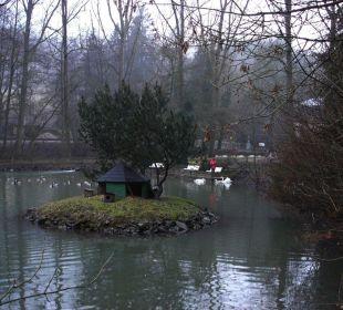Enten- und Schwanenteich an der Front Hotel Heidsmühle