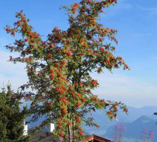 Spätsommer in unserem Garten Alpin-Ferienwohnungen Hochzillertal