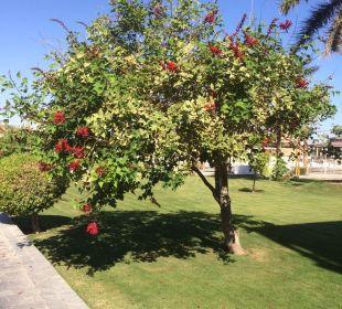 Gartenanlage Dana Beach Resort