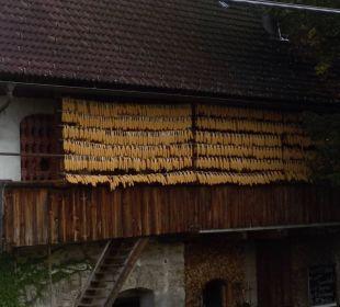 Bauernhof Bauernhof Liendl