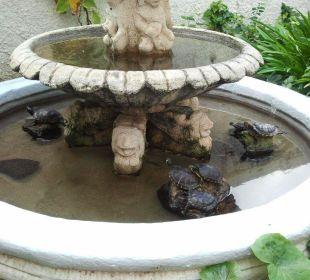 Schildkröten im Brunnen Hotel Dorotea