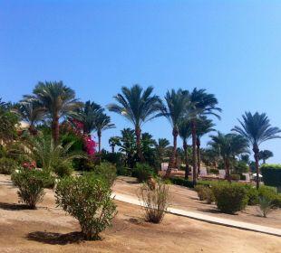 An der Beachbar Hotel Steigenberger Coraya Beach