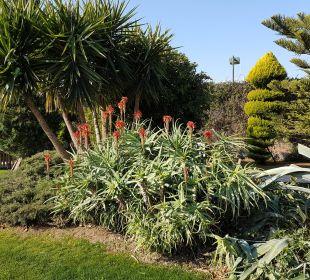 Blüht die Aloe Hotel Concorde De Luxe Resort