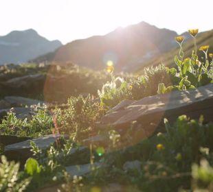Natur im Sommer Berghaus Jochpass