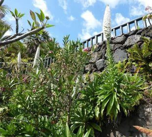 Gepflegter Hotelgarten Hotel Hacienda San Jorge
