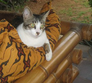 Die Hauskatze Saraswati Holiday House