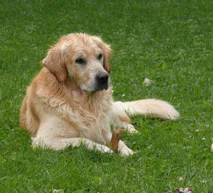 Unser Hund Tacka Gästehaus Martinsklause