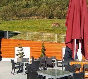Hotelterrasse Hotel Alpen Royal