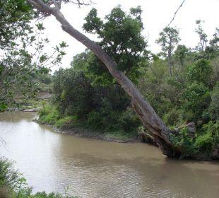 Flusslauf vor dem Zelt Mara Bush Camp