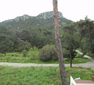 Blick aus Zimmer 307 Hotel Forest Park
