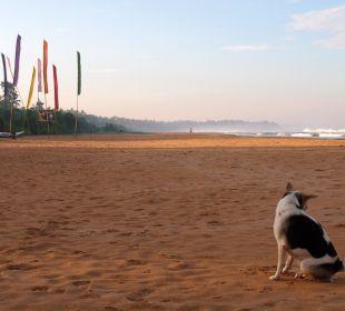Mein Morgenspaziergangbegleiter Wunderbar Beach Club Hotel