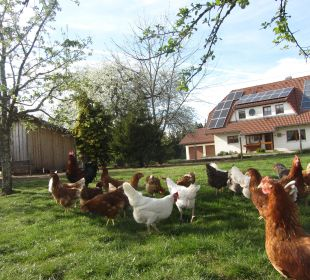 Hühner vor dem Nebengebäude Ferienbauernhof Oberjosenhof