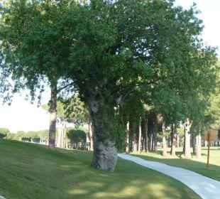700 Jahre alter Pistazienbaum Gloria Verde Resort