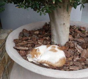 Katzen Ikos Olivia