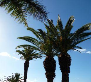Palmen im Hotelgarten Hotel The Cliff Bay (PortoBay)