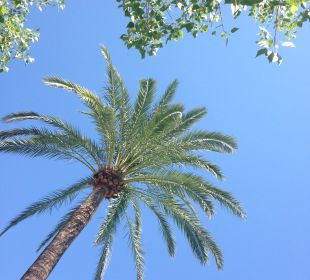 Gartenanlage JS Hotel Sol de Alcudia