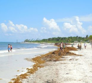 Es stinkt!! Secrets Maroma Beach Riviera Cancun