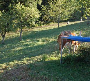 Die Kühe als direkte Nachbarn Oberulpointhof