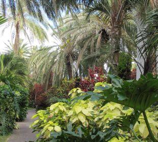 Pflanzen Pracht Hotel Hacienda San Jorge