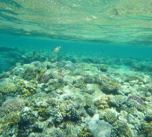 Rafa przy hotelu. Melia Sharm Resort & Spa