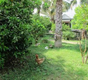 Unsere tiere im Garten Hotel Anatolia Resort