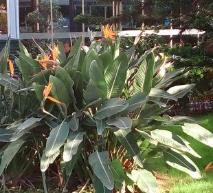 Hier blühen exotische Blumen Hotel Concorde De Luxe Resort