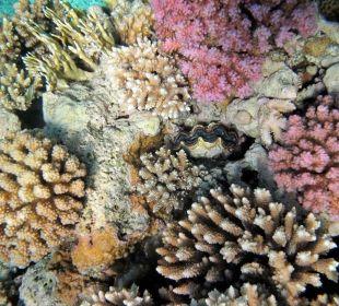 Hauseigenes Korallenriff Cyrene Grand Hotel